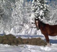 Djerko et Darek à la neige