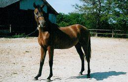 2002 – Onyx Duke